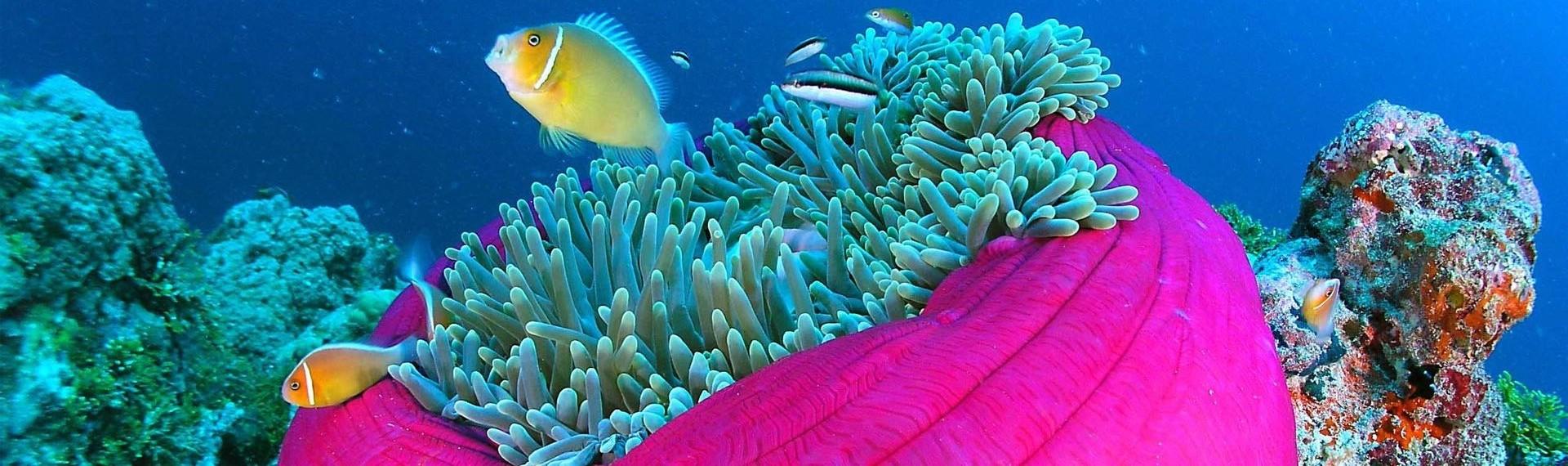Reef Glory